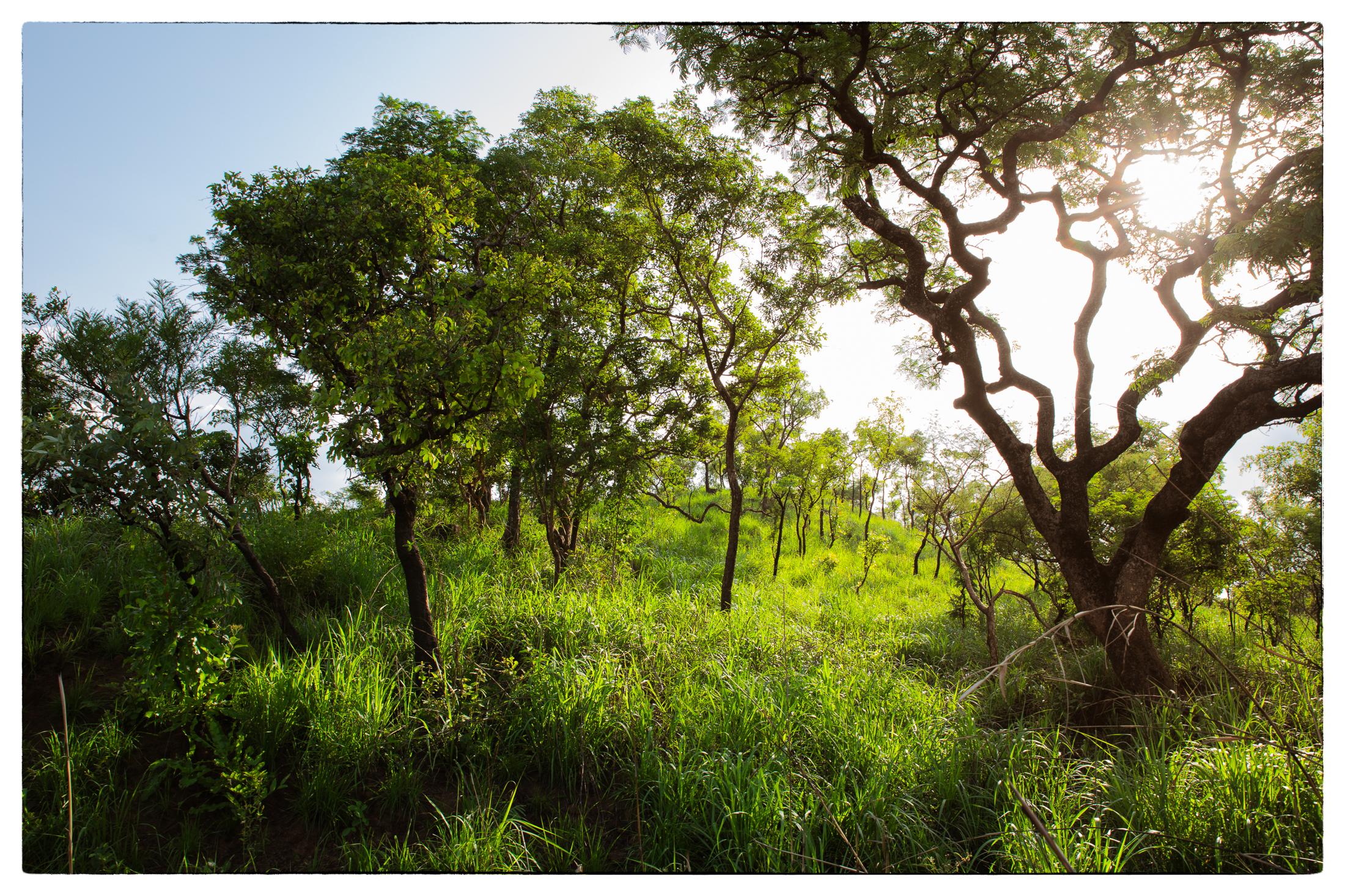 Grün-Afrika